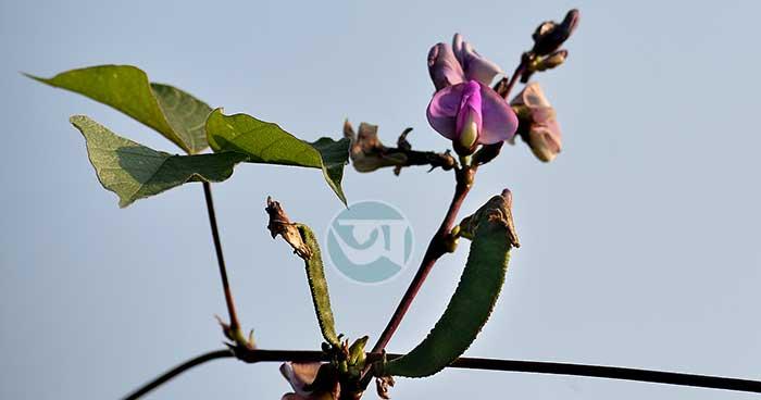 শিমে সৌন্দর্যময় শীতের সীতাকুণ্ড, ছবি: কমল দাশ