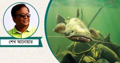 ৫০০ ভোল্টের ইলেকট্রিক মাছ