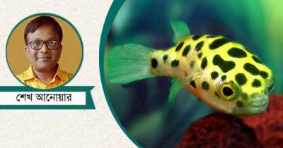 বিষাক্ত মাছ, স্পর্শেই মৃত্যু