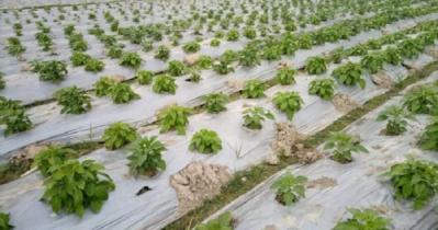 ডিজিটাল বাংলাদেশ: লাভবান হচ্ছে রাজশাহীর কৃষকরা