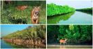সুন্দরবনে বন্যপ্রাণী শিকারি ধরিয়ে দিলে পুরস্কার ঘোষণা