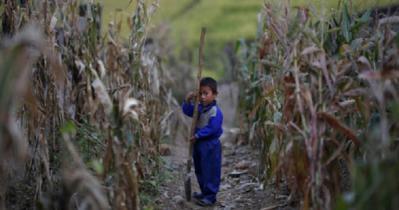 উত্তর কোরিয়ায় খাদ্য সংকট: কলার দর কেজিতে ৪৫ ডলার